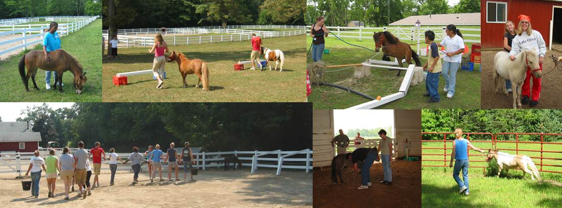 Learning Programs with Horses in Kalamazoo