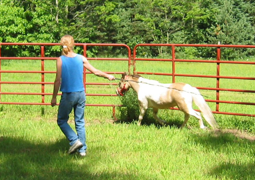 Personal Growth with Horses in Kalamazoo
